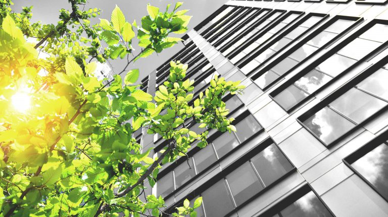 green tree outside office building